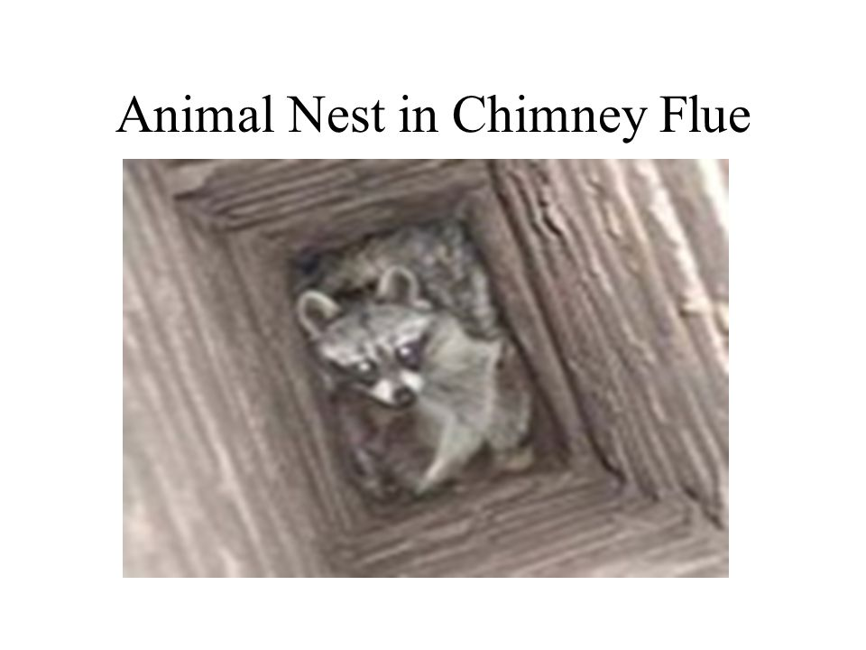 Animal Nest in Chimney Flue