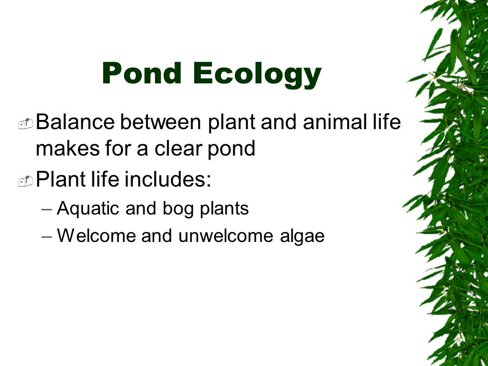 Pond Ecology  Balance between plant and animal life makes for a clear pond  Plant life includes: –Aquatic and bog plants –Welcome and unwelcome algae