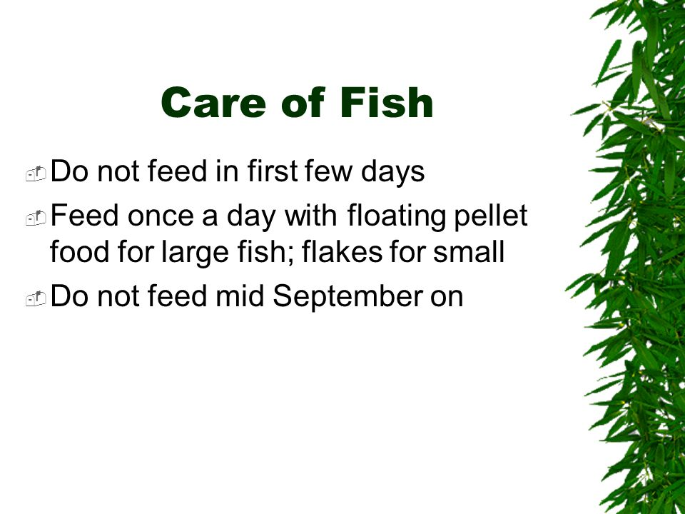 Care of Fish  Do not feed in first few days  Feed once a day with floating pellet food for large fish; flakes for small  Do not feed mid September on