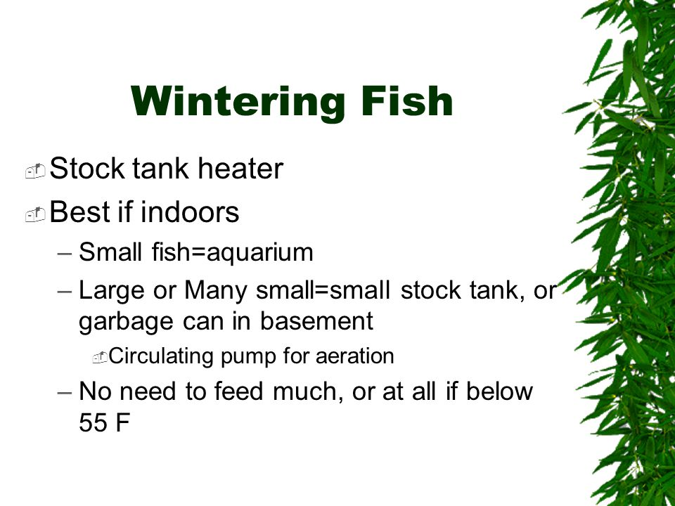 Wintering Fish  Stock tank heater  Best if indoors –Small fish=aquarium –Large or Many small=small stock tank, or garbage can in basement  Circulating pump for aeration –No need to feed much, or at all if below 55 F
