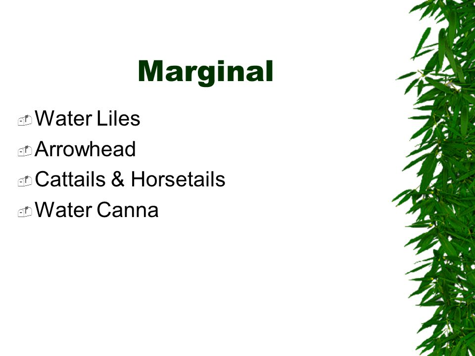 Marginal  Water Liles  Arrowhead  Cattails & Horsetails  Water Canna