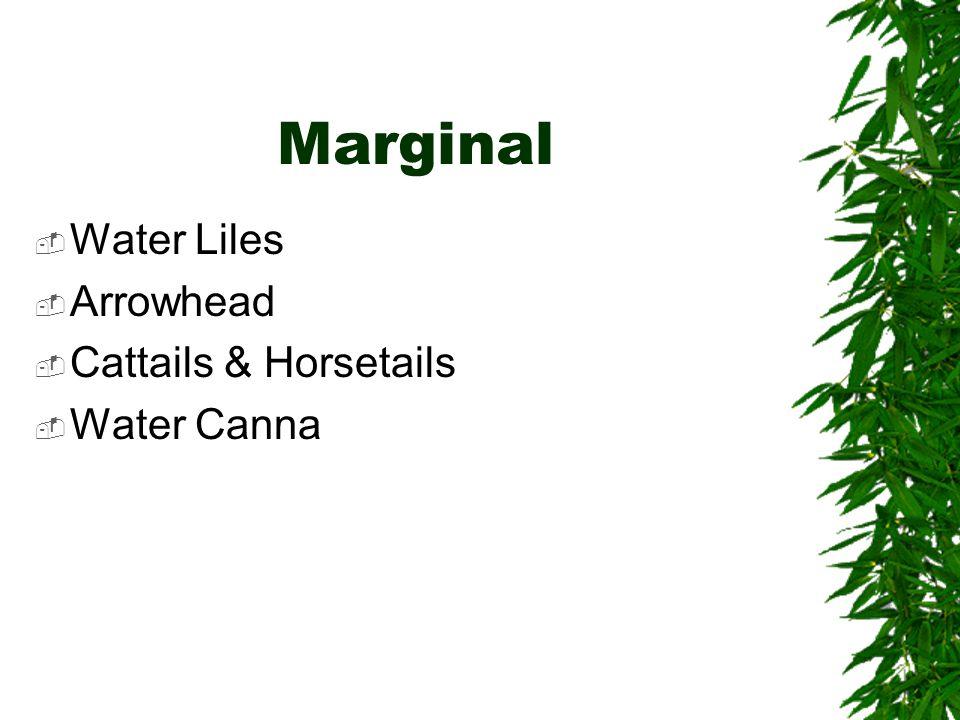 Marginal  Water Liles  Arrowhead  Cattails & Horsetails  Water Canna