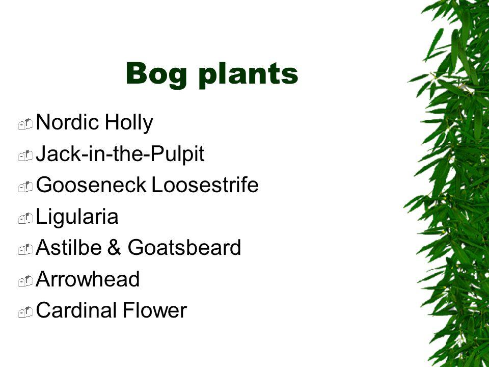 Bog plants  Nordic Holly  Jack-in-the-Pulpit  Gooseneck Loosestrife  Ligularia  Astilbe & Goatsbeard  Arrowhead  Cardinal Flower