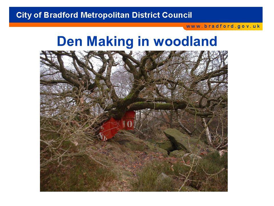 Den Making in woodland
