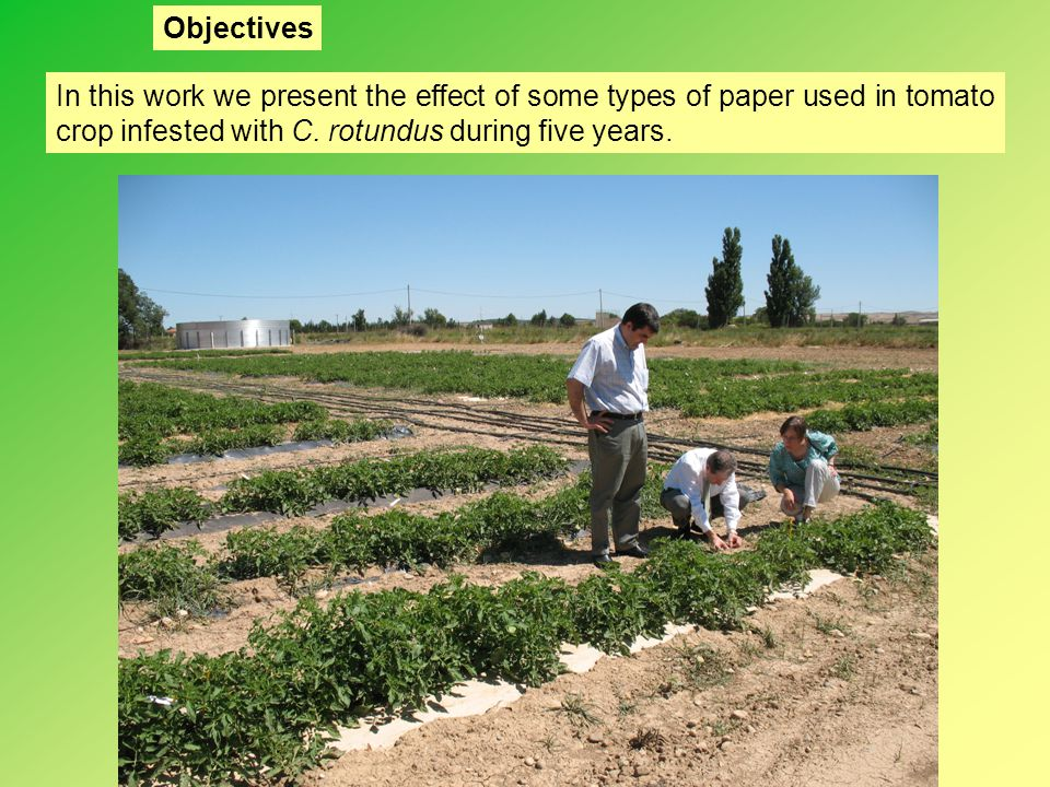 In this work we present the effect of some types of paper used in tomato crop infested with C. rotundus during five years. Objectives