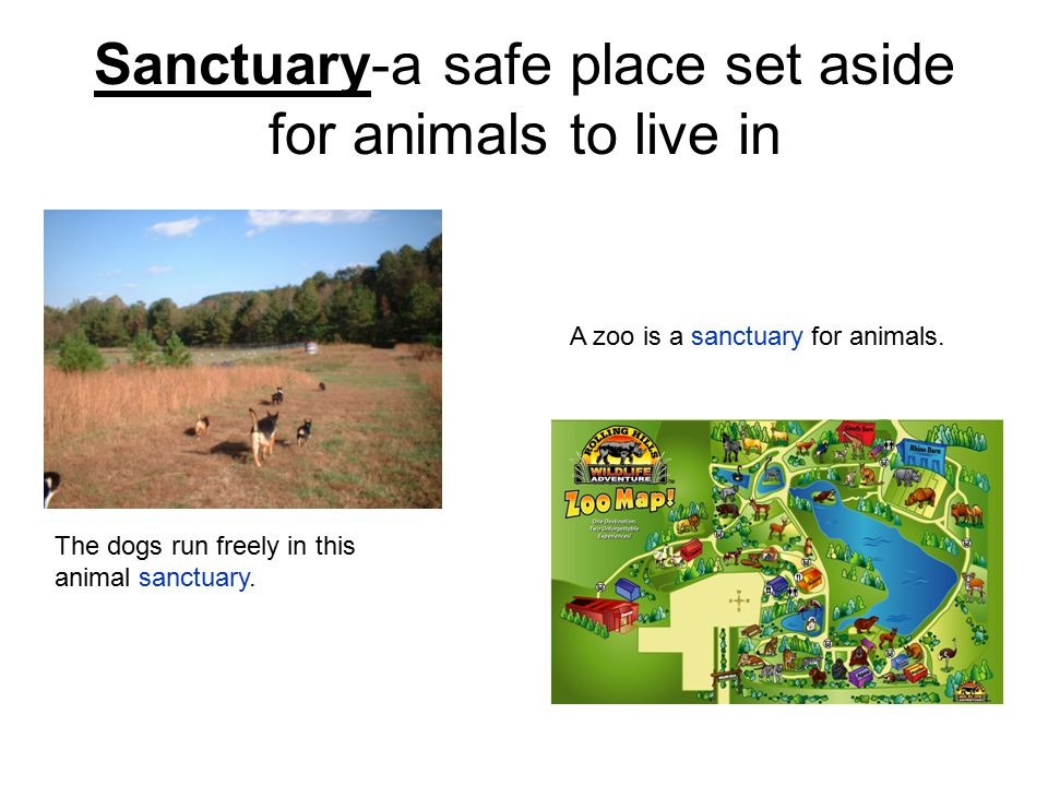 Sanctuary-a safe place set aside for animals to live in The dogs run freely in this animal sanctuary.