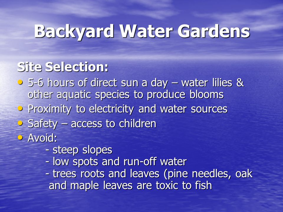 Backyard Water Gardens Site Selection: 5-6 hours of direct sun a day – water lilies & other aquatic species to produce blooms 5-6 hours of direct sun a day – water lilies & other aquatic species to produce blooms Proximity to electricity and water sources Proximity to electricity and water sources Safety – access to children Safety – access to children Avoid: - steep slopes - low spots and run-off water - trees roots and leaves (pine needles, oak and maple leaves are toxic to fish Avoid: - steep slopes - low spots and run-off water - trees roots and leaves (pine needles, oak and maple leaves are toxic to fish