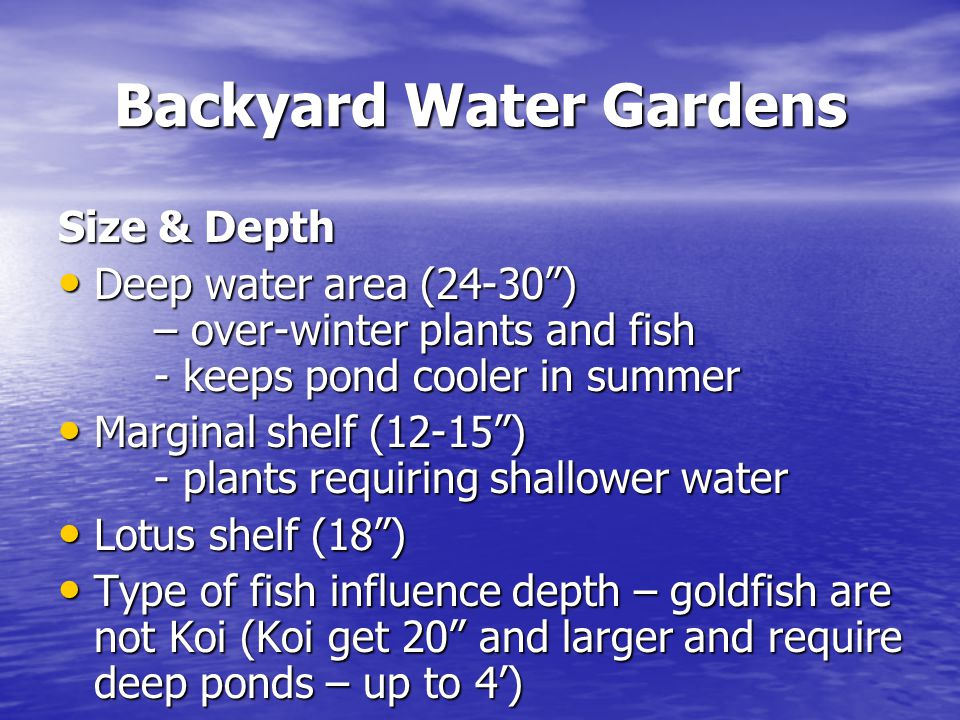 Backyard Water Gardens Size & Depth Deep water area (24-30 ) – over-winter plants and fish - keeps pond cooler in summer Deep water area (24-30 ) – over-winter plants and fish - keeps pond cooler in summer Marginal shelf (12-15 ) - plants requiring shallower water Marginal shelf (12-15 ) - plants requiring shallower water Lotus shelf (18 ) Lotus shelf (18 ) Type of fish influence depth – goldfish are not Koi (Koi get 20 and larger and require deep ponds – up to 4') Type of fish influence depth – goldfish are not Koi (Koi get 20 and larger and require deep ponds – up to 4')