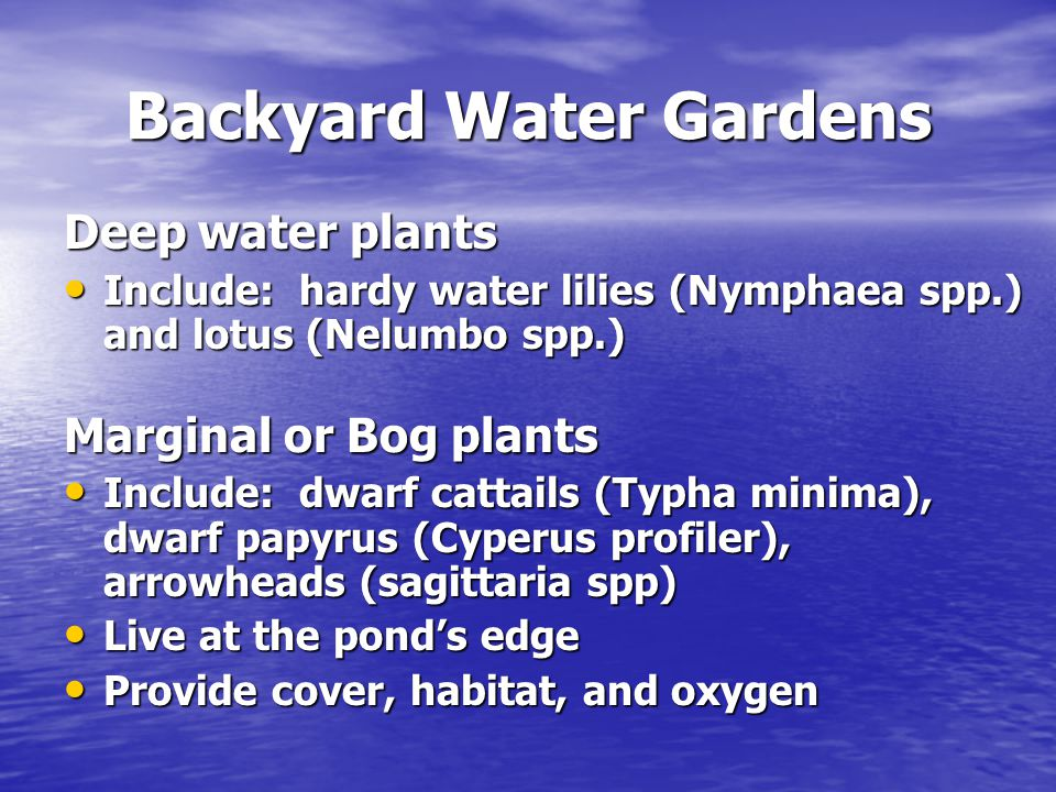 Backyard Water Gardens Deep water plants Include: hardy water lilies (Nymphaea spp.) and lotus (Nelumbo spp.) Include: hardy water lilies (Nymphaea sp