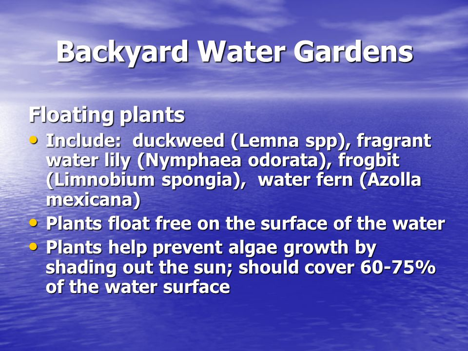 Backyard Water Gardens Floating plants Include: duckweed (Lemna spp), fragrant water lily (Nymphaea odorata), frogbit (Limnobium spongia), water fern