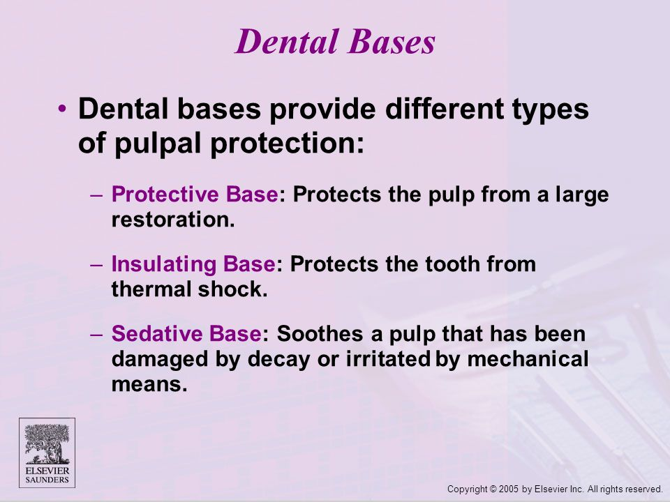 Copyright © 2005 by Elsevier Inc. All rights reserved. Dental bases provide different types of pulpal protection: –Protective Base: Protects the pulp