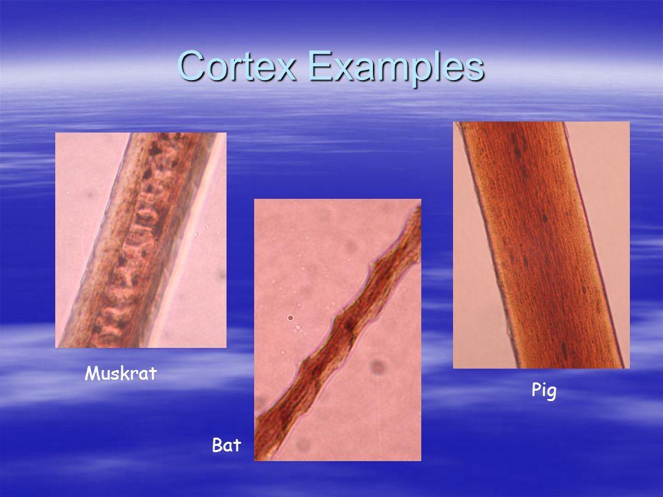 Cortex Examples Muskrat Bat Pig