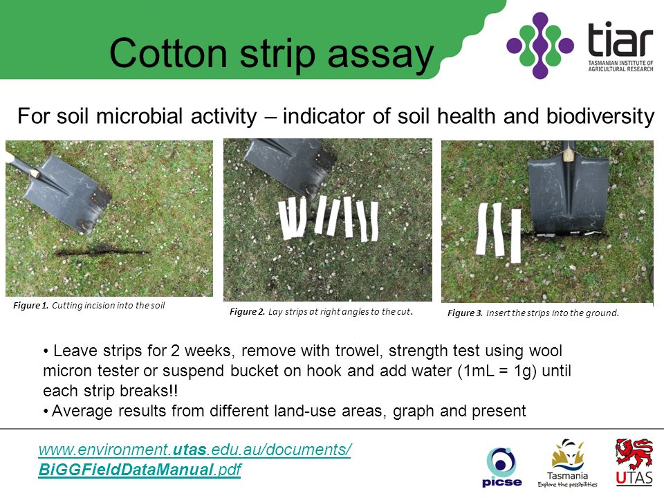 Cotton strip assay For soil microbial activity – indicator of soil health and biodiversity www.environment.utas.edu.au/documents/ BiGGFieldDataManual.pdf Figure 1.