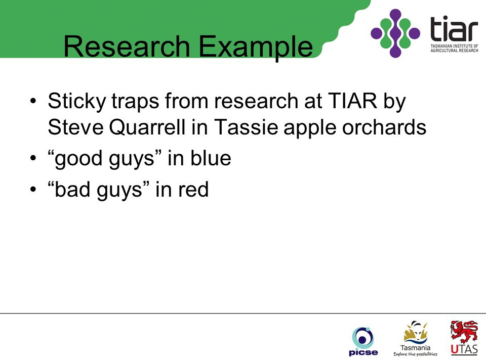 Research Example Sticky traps from research at TIAR by Steve Quarrell in Tassie apple orchards good guys in blue bad guys in red