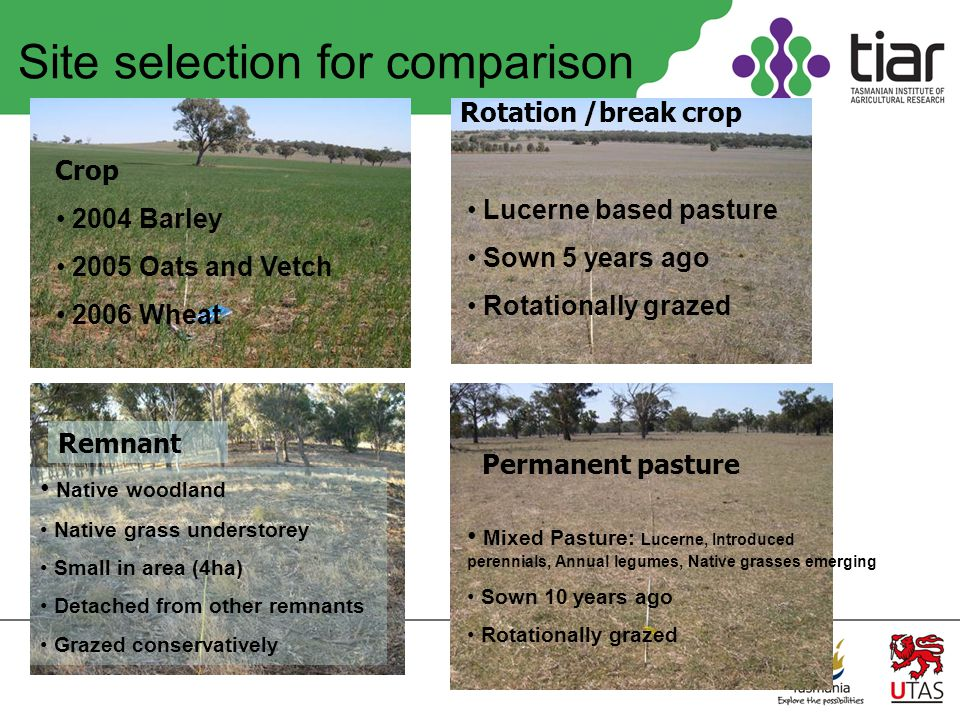 Site selection for comparison Remnant Native woodland Native grass understorey Small in area (4ha) Detached from other remnants Grazed conservatively Rotation /break crop Lucerne based pasture Sown 5 years ago Rotationally grazed Crop 2004 Barley 2005 Oats and Vetch 2006 Wheat Permanent pasture Mixed Pasture: Lucerne, Introduced perennials, Annual legumes, Native grasses emerging Sown 10 years ago Rotationally grazed