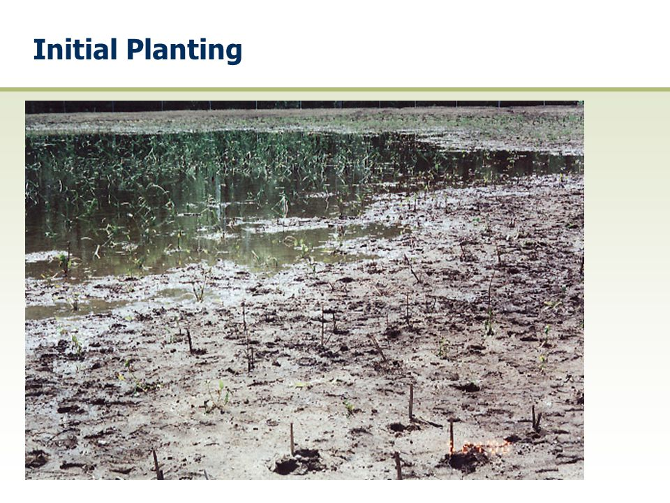 Initial Planting