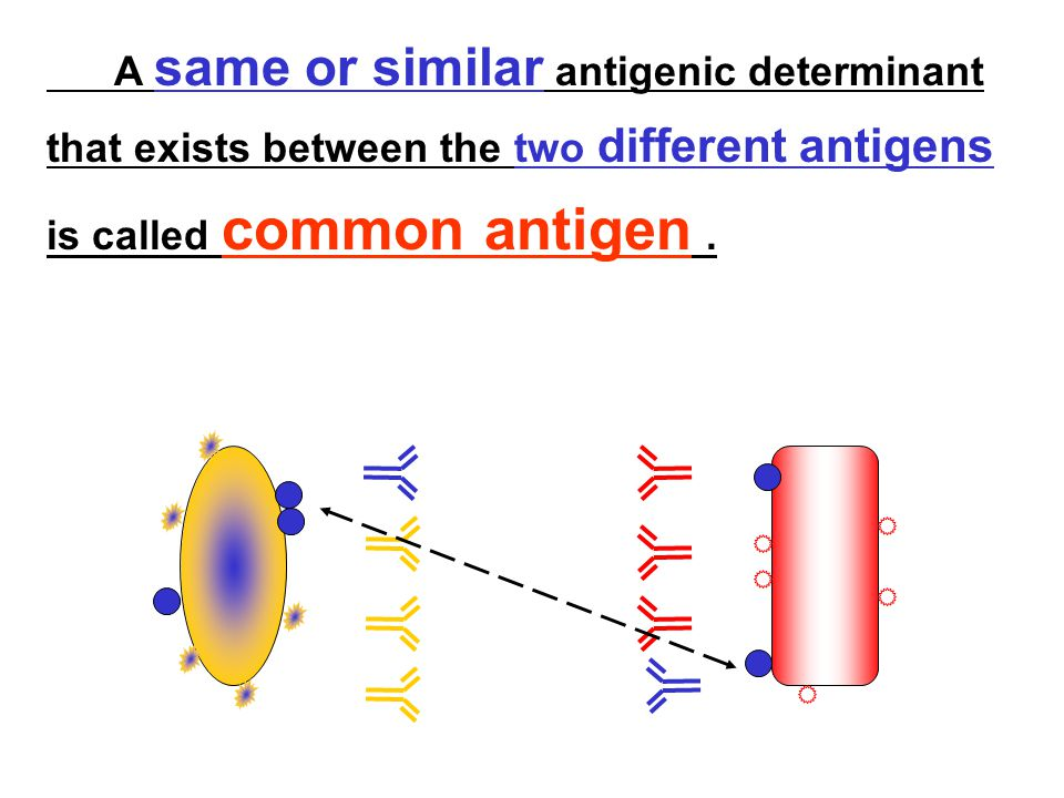 A same or similar antigenic determinant that exists between the two different antigens is called common antigen.