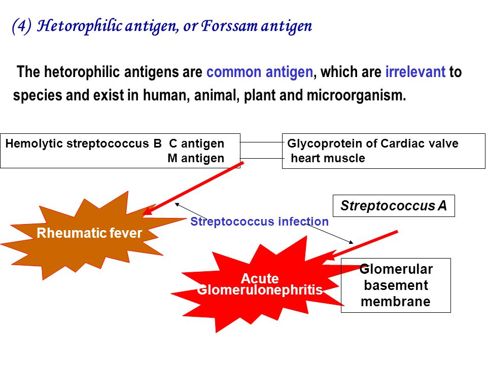 (4) Hetorophilic antigen, or Forssam antigen Hemolytic streptococcus B C antigen M antigen Streptococcus infection Acute Glomerulonephritis Glycoprotein of Cardiac valve heart muscle Rheumatic fever Streptococcus A Glomerular basement membrane The hetorophilic antigens are common antigen, which are irrelevant to species and exist in human, animal, plant and microorganism.