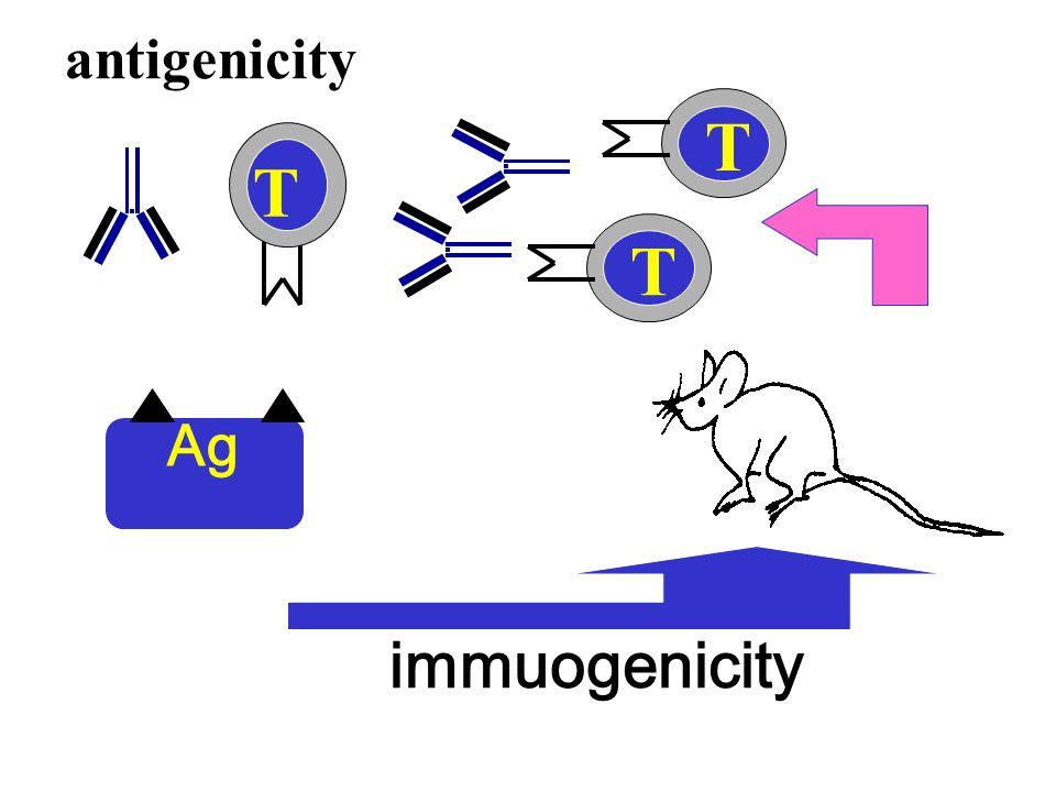 antigenicity immuogenicity T T T Ag