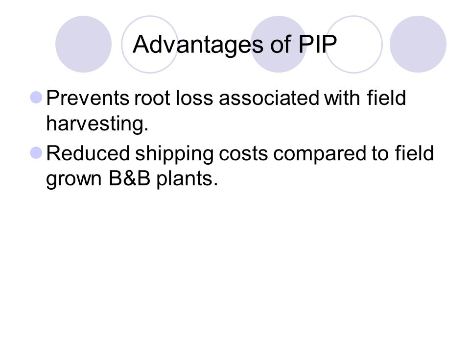 Advantages of PIP Prevents root loss associated with field harvesting. Reduced shipping costs compared to field grown B&B plants.