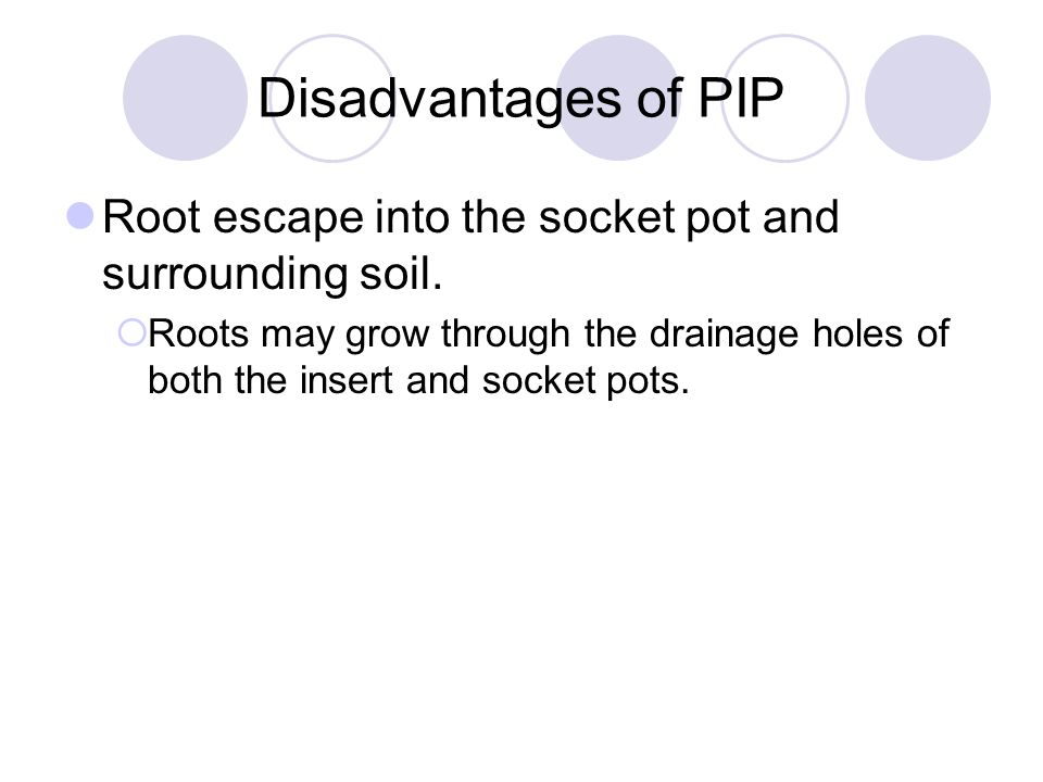 Disadvantages of PIP Root escape into the socket pot and surrounding soil.  Roots may grow through the drainage holes of both the insert and socket p