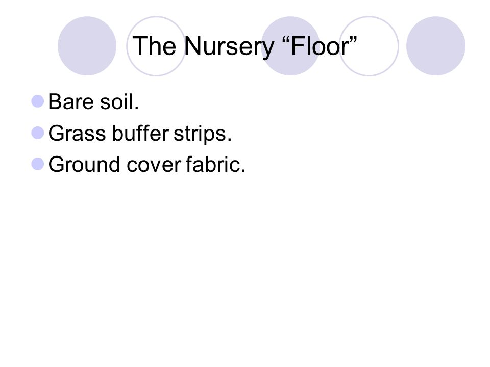 "The Nursery ""Floor"" Bare soil. Grass buffer strips. Ground cover fabric."