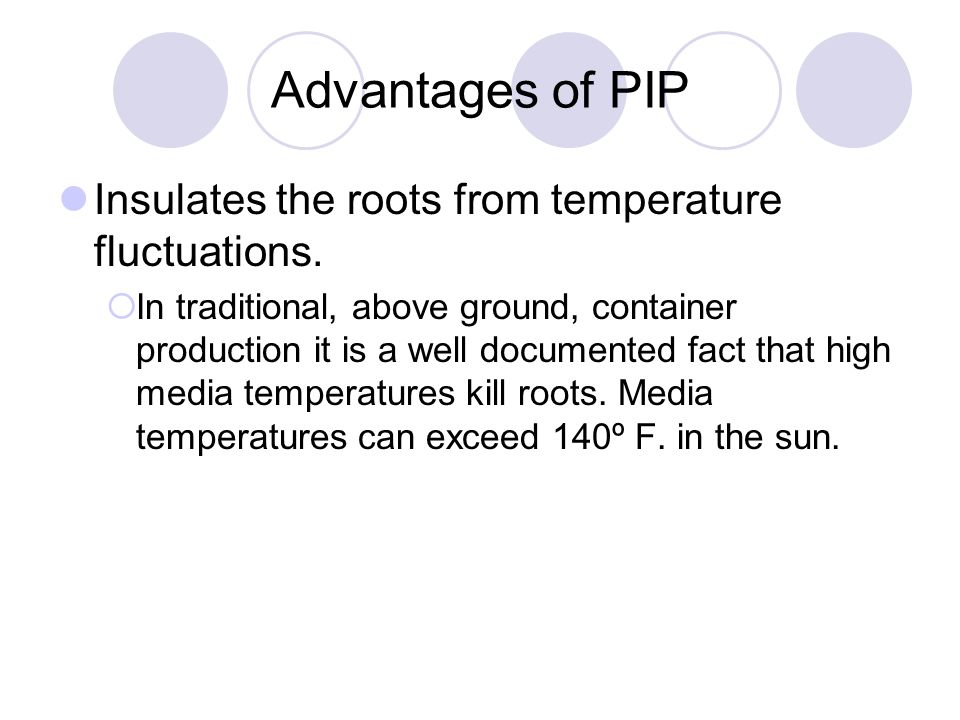 Advantages of PIP Insulates the roots from temperature fluctuations.  In traditional, above ground, container production it is a well documented fact