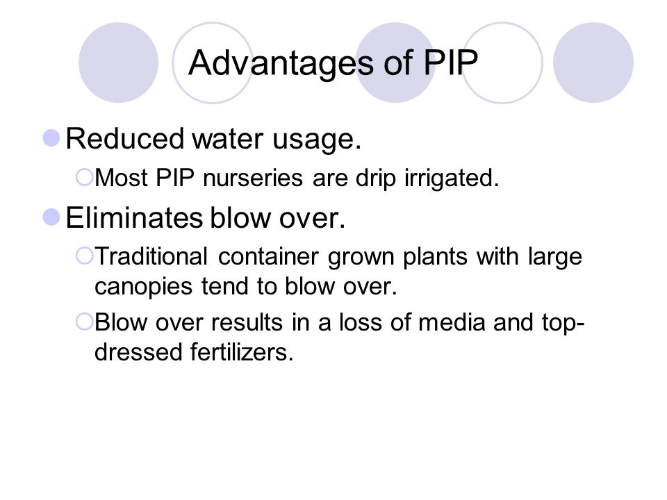 Advantages of PIP Reduced water usage.  Most PIP nurseries are drip irrigated. Eliminates blow over.  Traditional container grown plants with large