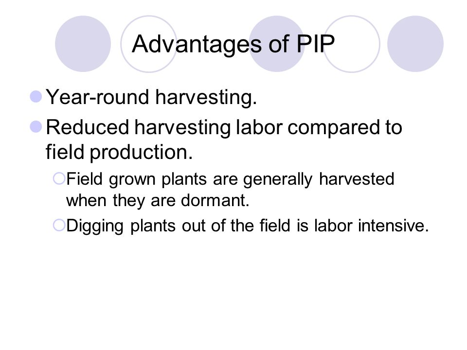 Advantages of PIP Year-round harvesting. Reduced harvesting labor compared to field production.  Field grown plants are generally harvested when they