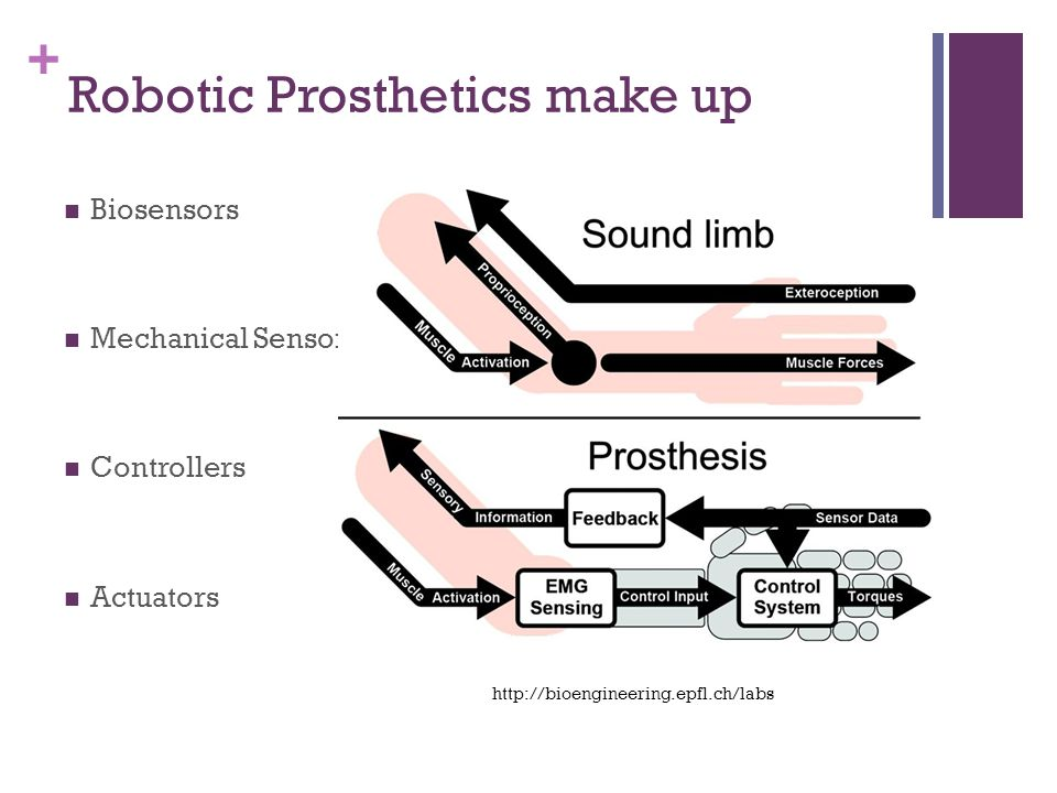 + Robotic Prosthetics make up Biosensors Mechanical Sensors Controllers Actuators http://bioengineering.epfl.ch/labs