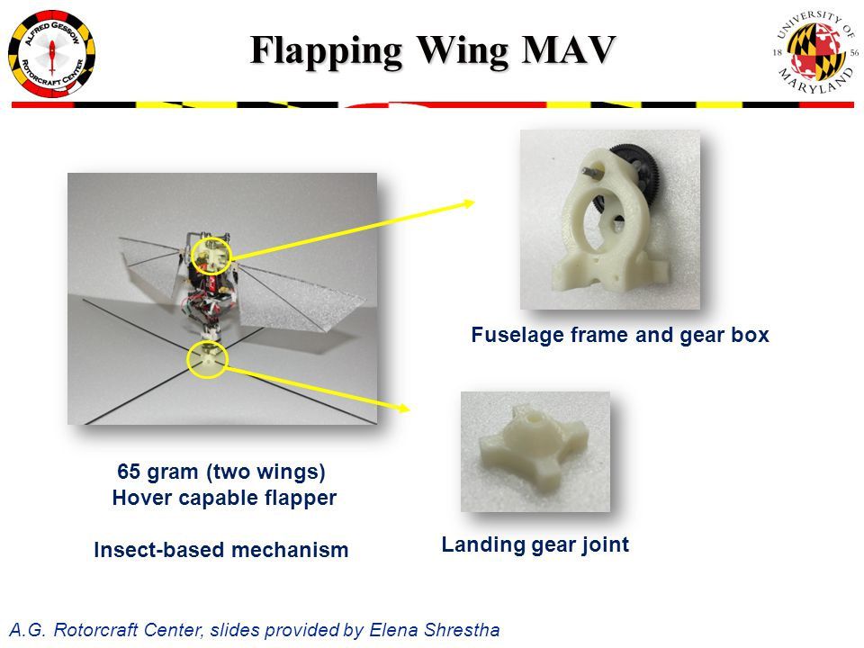 Flapping Wing MAV 65 gram (two wings) Hover capable flapper Insect-based mechanism Landing gear joint Fuselage frame and gear box A.G.