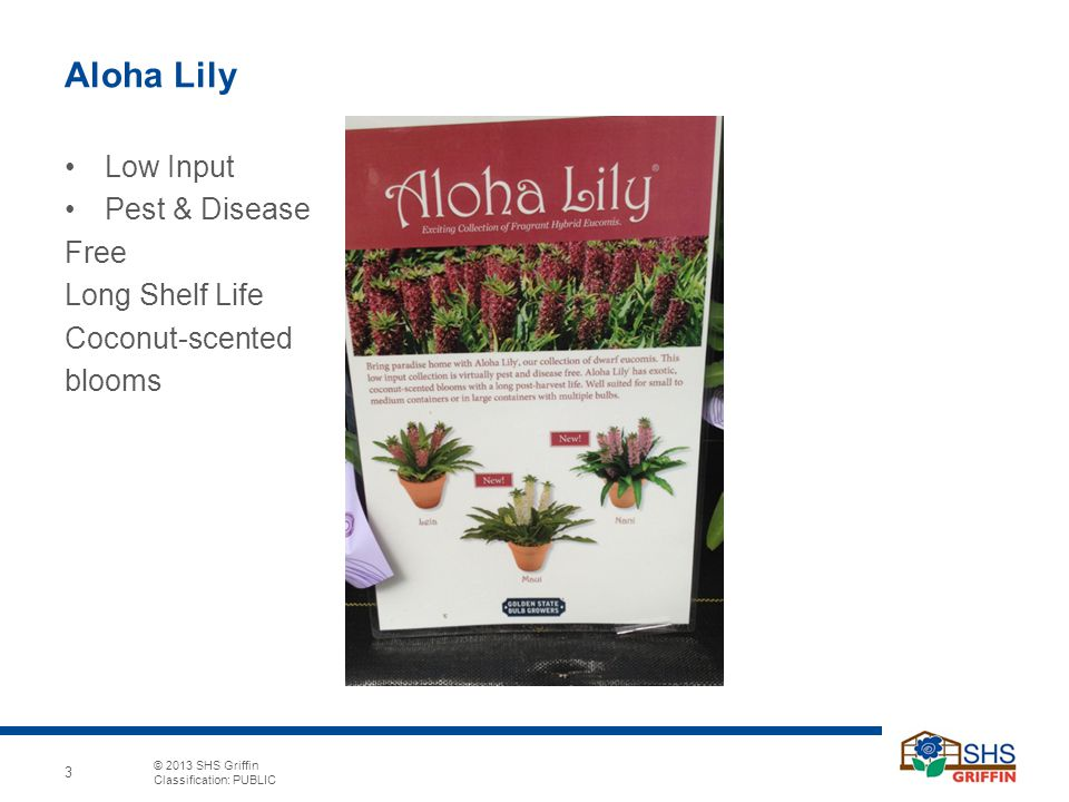 © 2013 SHS Griffin Classification: PUBLIC 3 Aloha Lily Low Input Pest & Disease Free Long Shelf Life Coconut-scented blooms