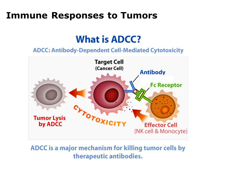 APCs are immunocytes that can uptake, process and present antigens to other lymphocytes. CONCEPT
