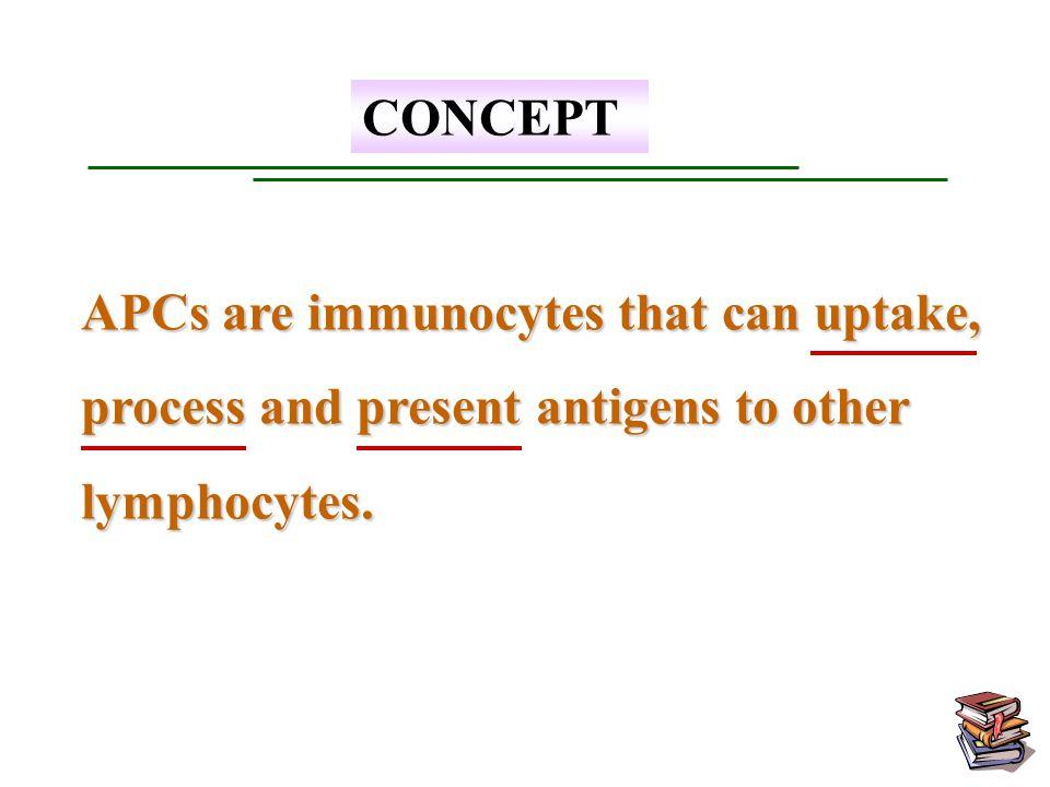 Dendritic Cells (DCs) Dendritic Cells (DCs) Macrophages (M  ) Macrophages (M  ) B Lymphocytes B Lymphocytes Professional APCs
