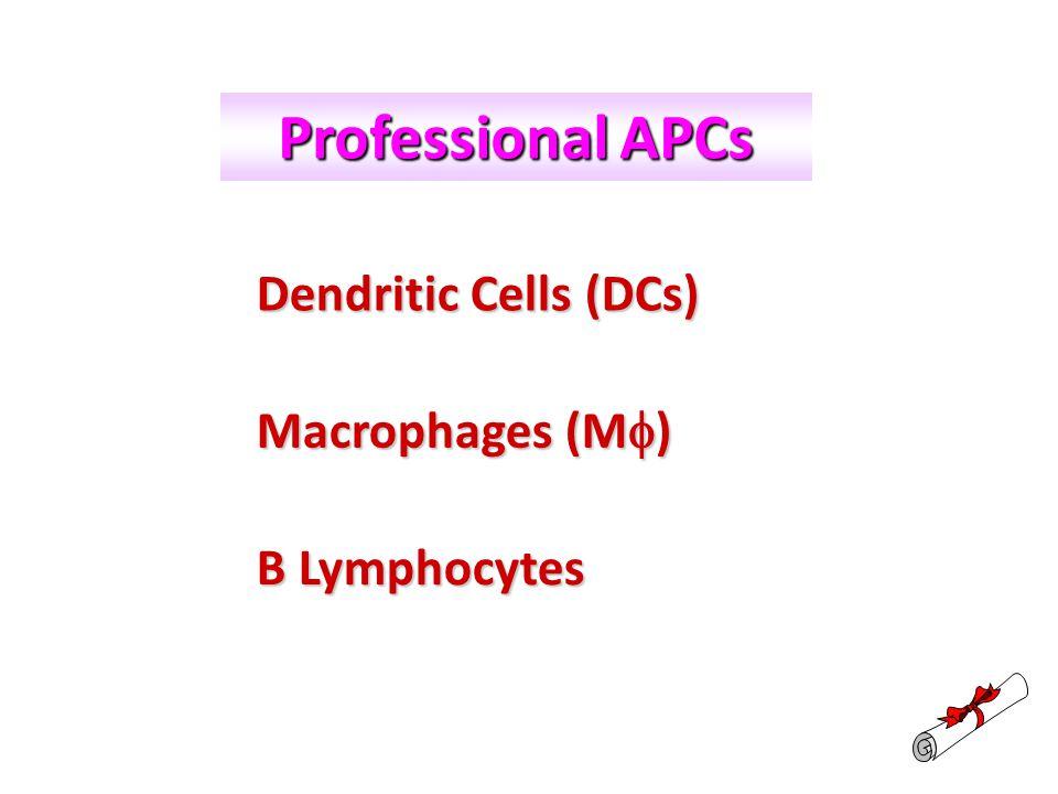 Ralph.M.Steinman, 1973 I. Dendritic Cells (DCs)