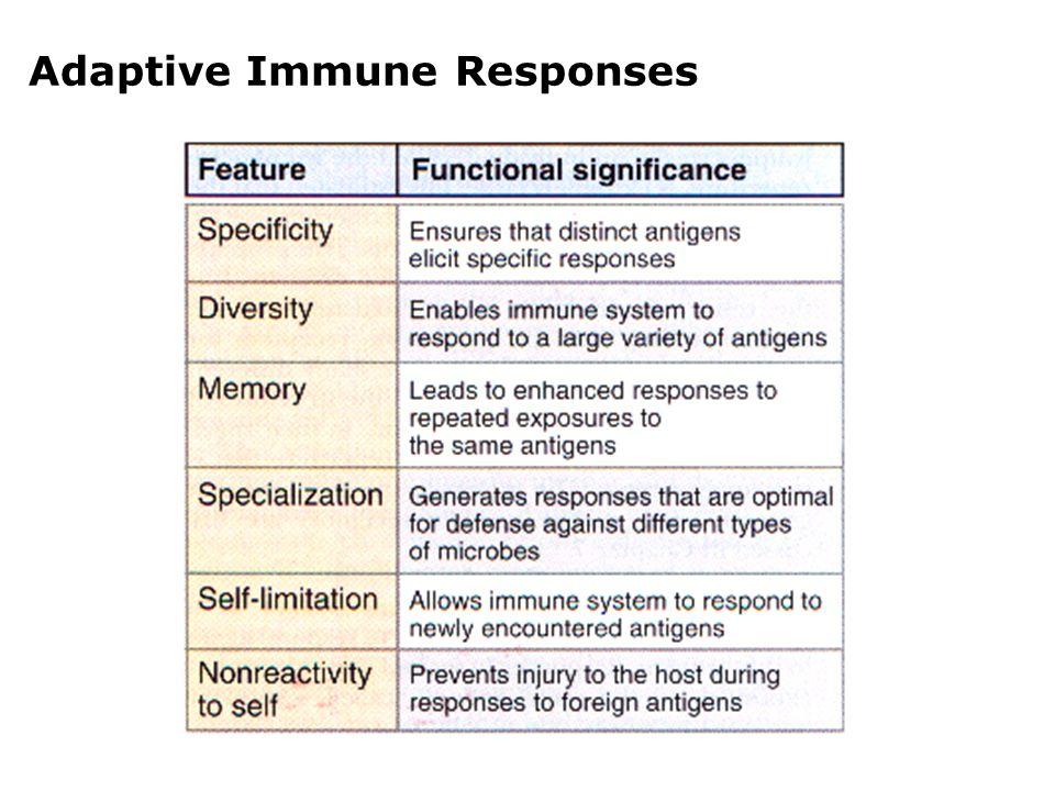Cellular Components Adaptive Immune Responses Lymphocytes - B, Th, CTL, NKT Antigen-presenting cells(APCs) - DC, M, B Effector cells - Activated T cells, mononuclear phagocytes