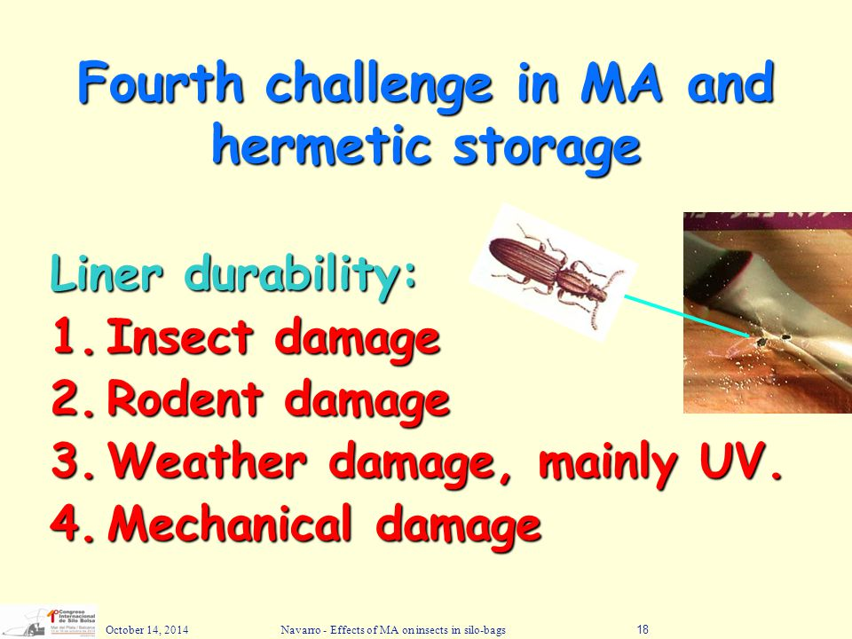 October 14, 2014Navarro - Effects of MA on insects in silo-bags18 Fourth challenge in MA and hermetic storage Liner durability: 1.Insect damage 2.Rode