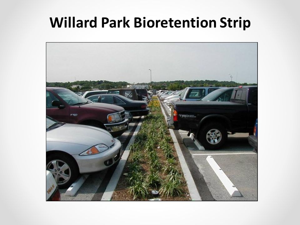 Willard Park Bioretention Strip