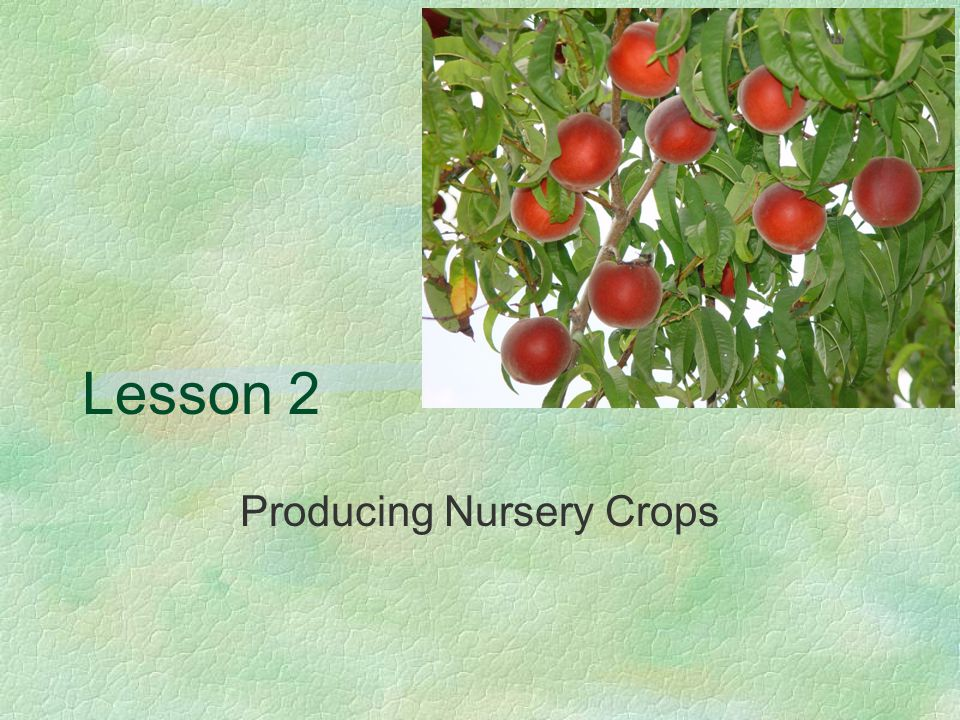 Lesson 2 Producing Nursery Crops