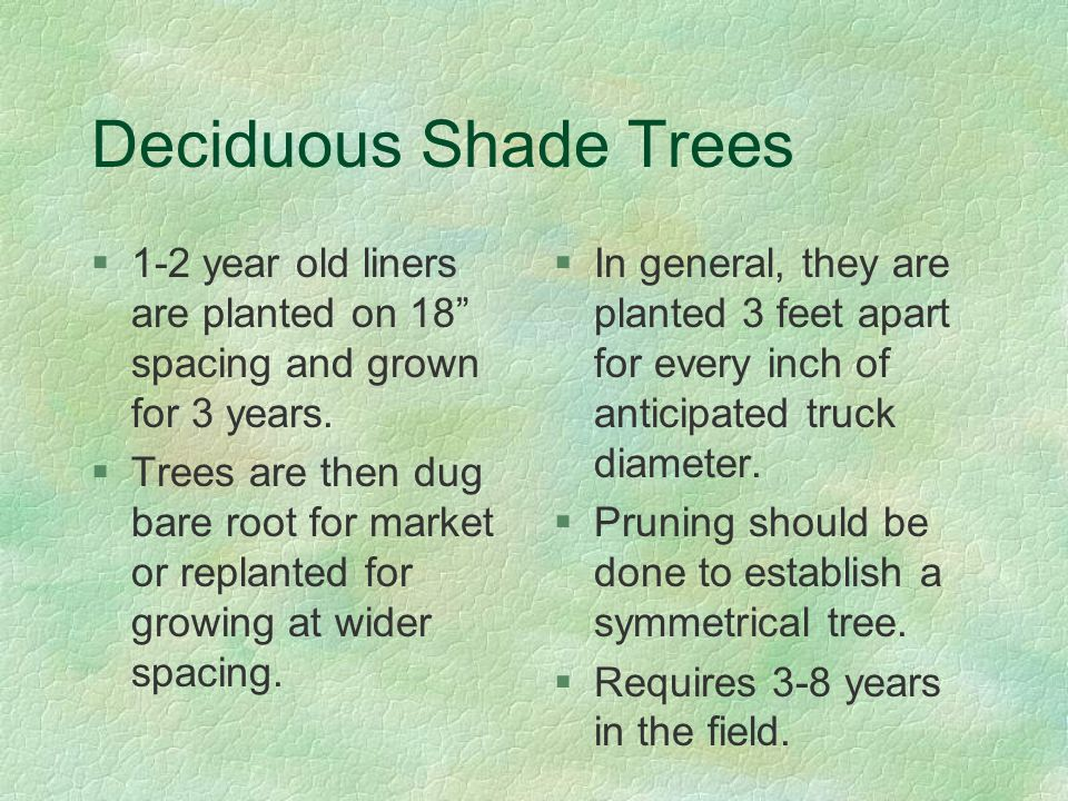Deciduous Shade Trees §1-2 year old liners are planted on 18 spacing and grown for 3 years.
