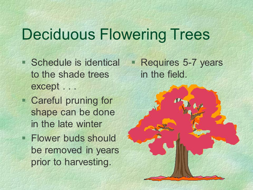 Deciduous Flowering Trees §Schedule is identical to the shade trees except...