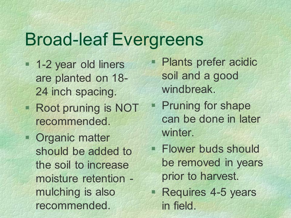 Broad-leaf Evergreens §1-2 year old liners are planted on 18- 24 inch spacing.