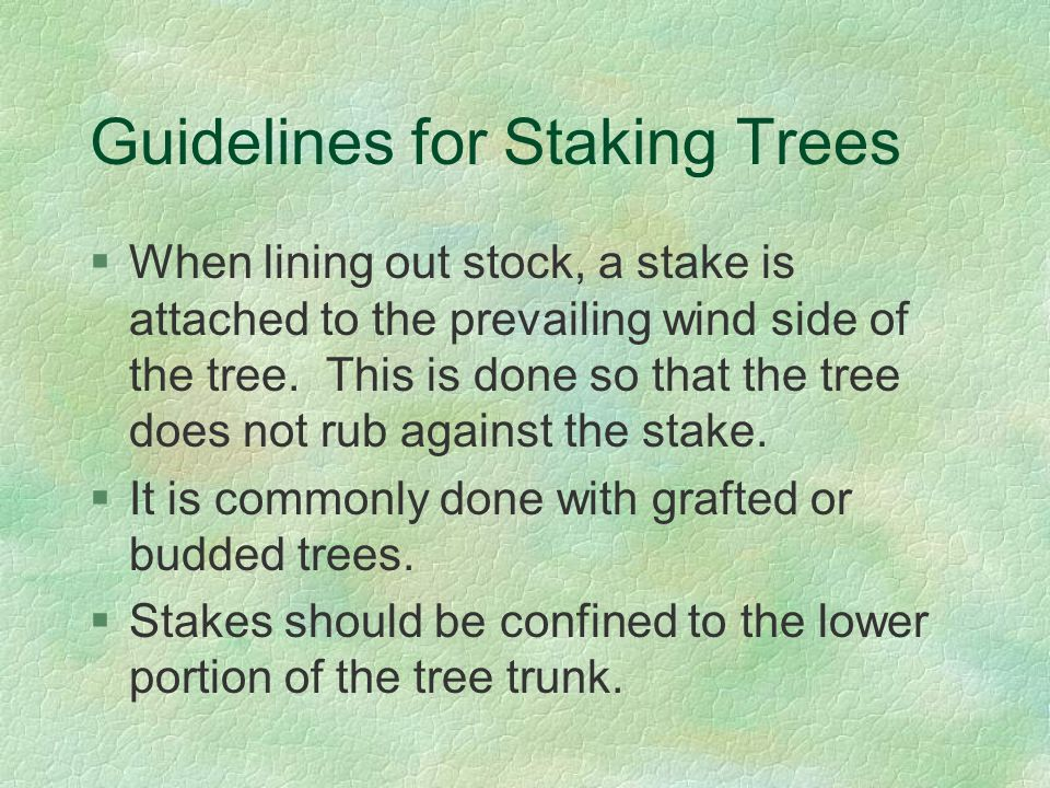 Guidelines for Staking Trees §When lining out stock, a stake is attached to the prevailing wind side of the tree.