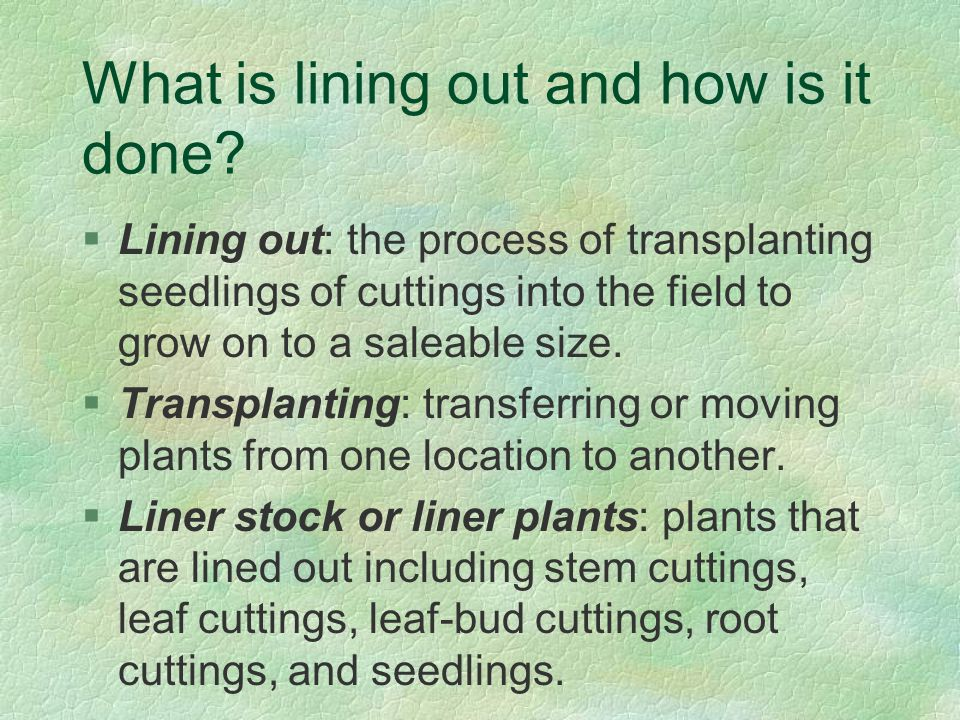 Pruning Guidelines and Information §Done to direct the growth of young plants and to correct any structural weaknesses.