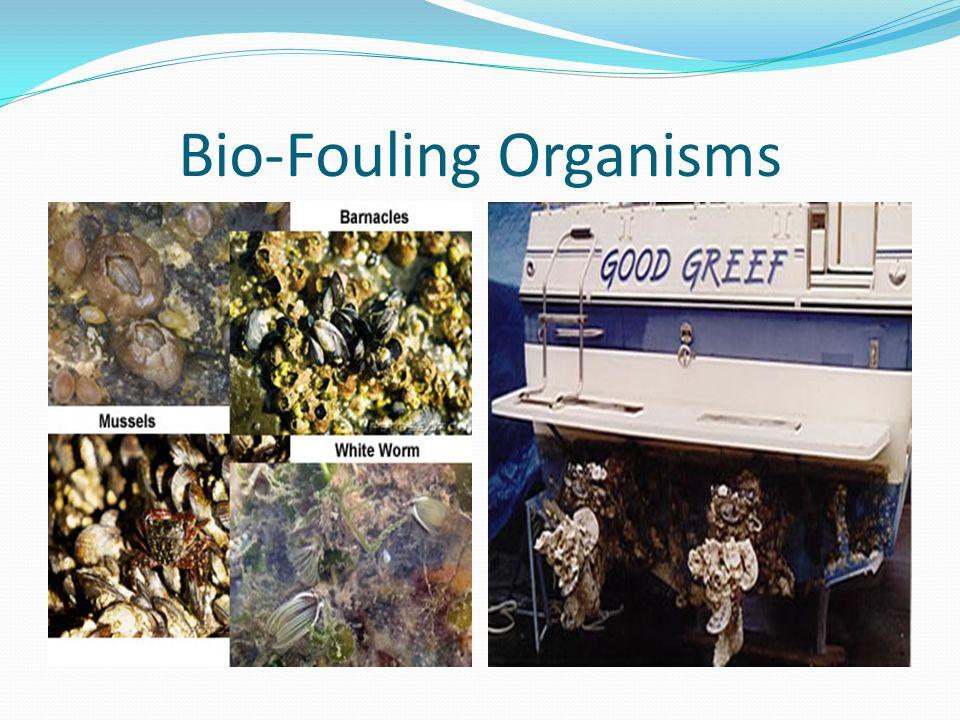 Bio-Fouling Organisms