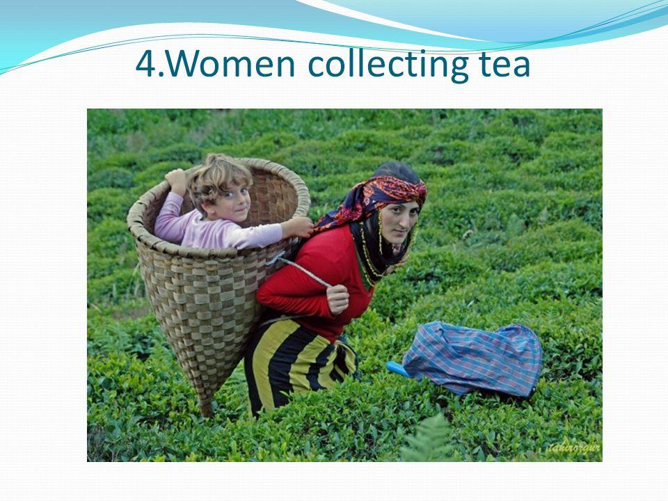 4.Women collecting tea