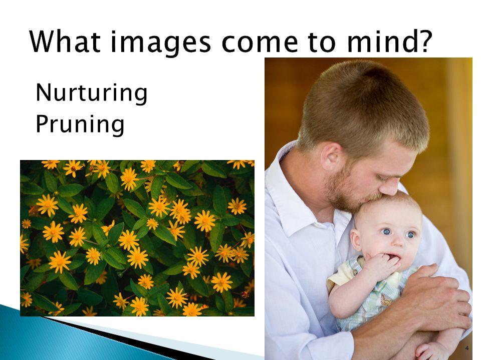 Nurturing Pruning 4