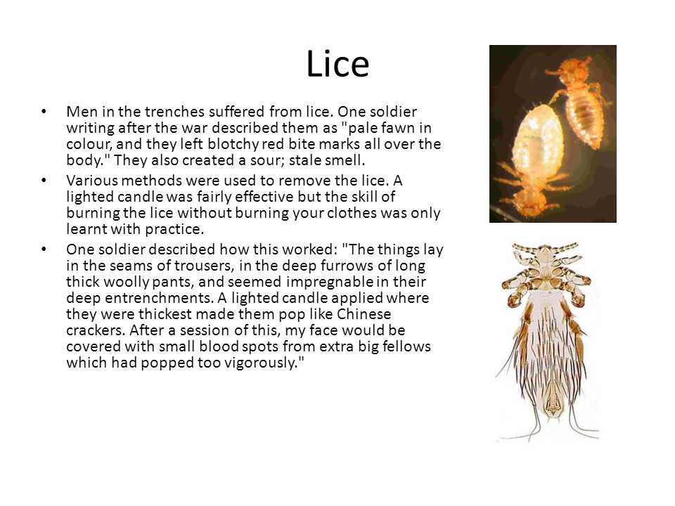 Lice Men in the trenches suffered from lice. One soldier writing after the war described them as