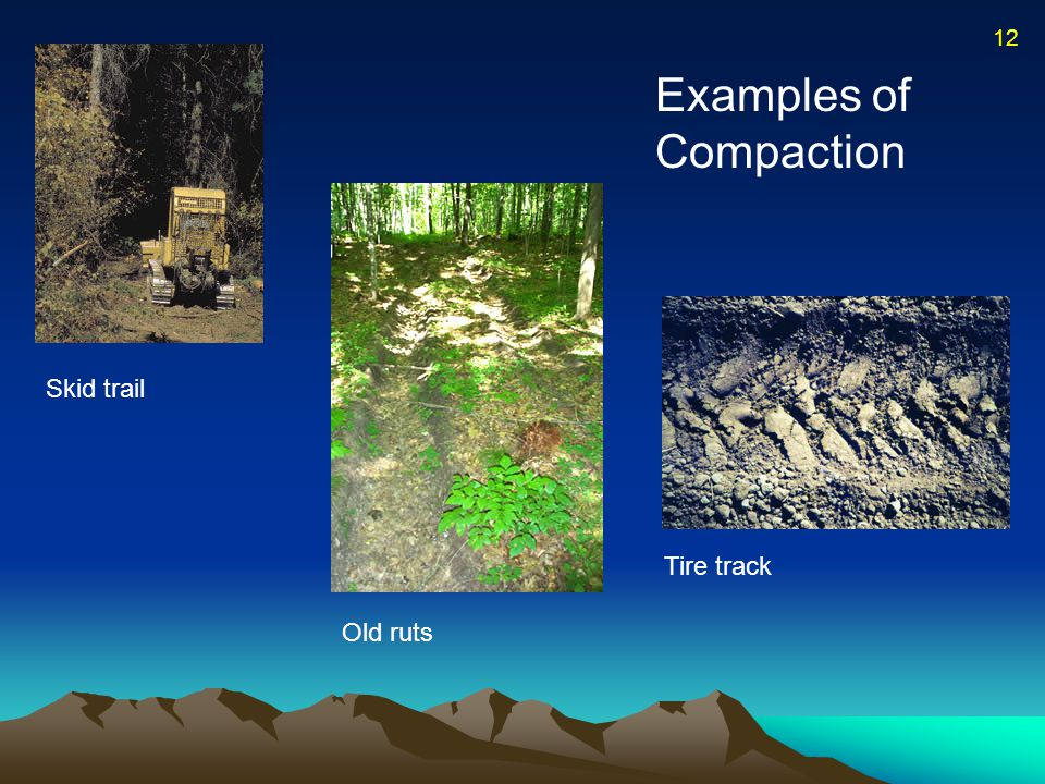 Examples of Compaction Skid trail Old ruts Tire track 12