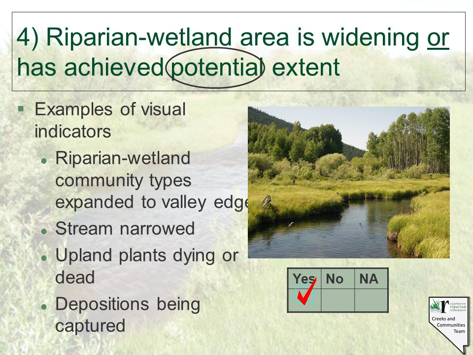 §Examples of visual indicators l Riparian-wetland community types expanded to valley edge l Stream narrowed l Upland plants dying or dead l Deposition